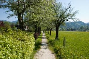 Bad Goisern im Frühling